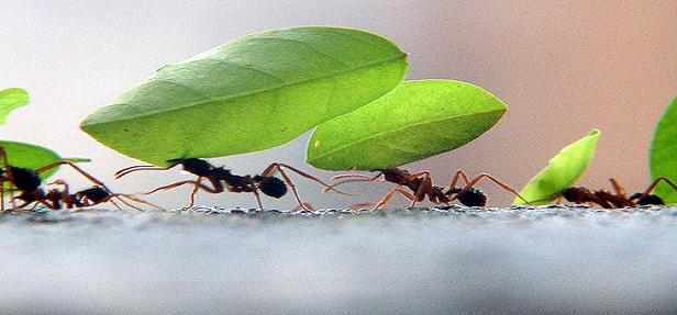 Que tal nos tornarmos médiuns formigas?